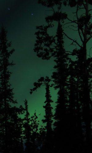 Northern Light Tour Yukon