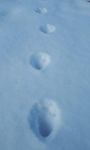 Snowshoe Tour Yukon